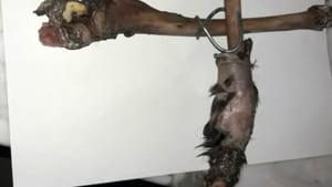 aggressione-acido-falchera-zampe-animale-180419-2
