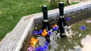calici in giardino- orto botanico borgo medievale-4