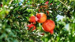 autumnus- piante e fiori dal medioevo-4
