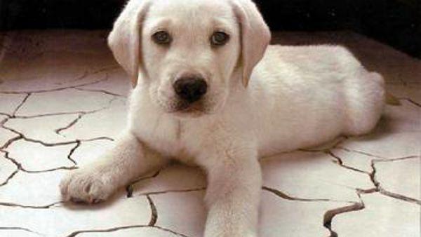 La rieducazione comportamentale del cane