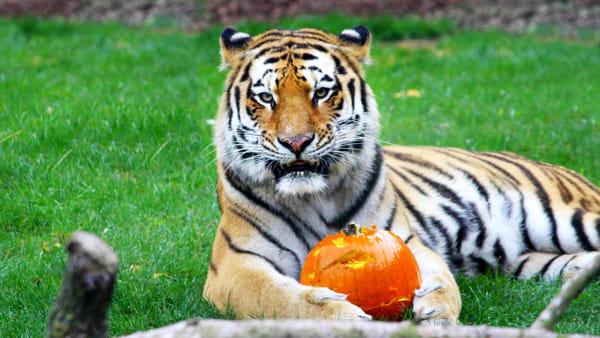 Halloween a Zoom, debutta l'Escape Room per grandi e piccini