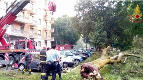 albero sopra auto lungo Po antonelli (1)-2