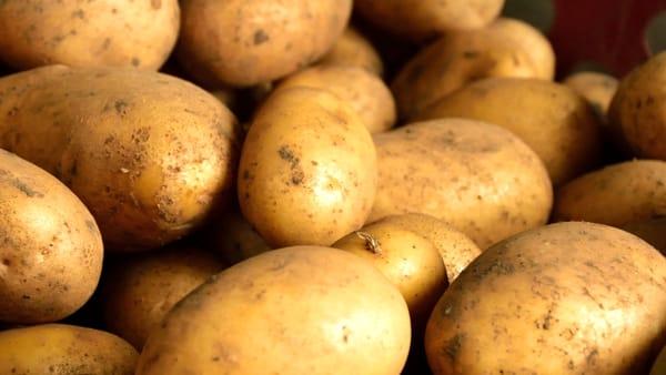 Fiera della patata e della toma a Novalesa