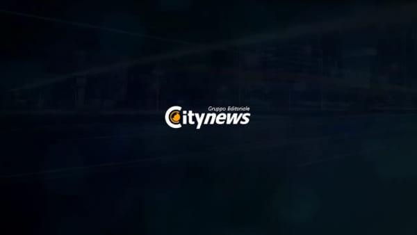 Le libellule sono tornate, nuova invasione in alcune zone della città: video