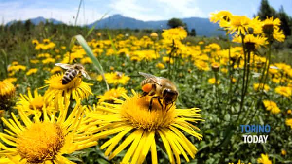 """""""Le api: una speranza per l'uomo"""", convegno al Centro per l'Antroposofia"""