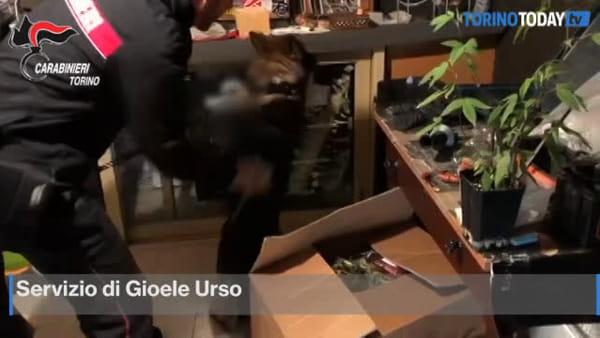 Una stanza segreta in casa per la coltivazione di marijuana: arrestato