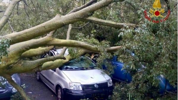 albero sopra auto lungo Po antonelli (2)-2