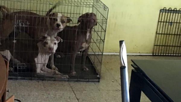 cani maltrattati denutriti appartamento Barriera (1)-2