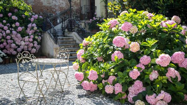 Ortensia Day a Romano Canavese