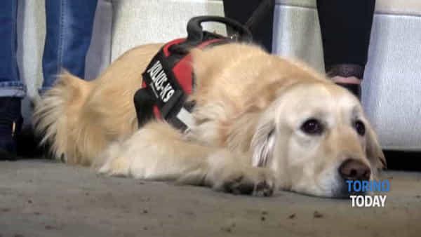 Ansia e depressione da tumore, ecco come combatterle con la Pet Therapy