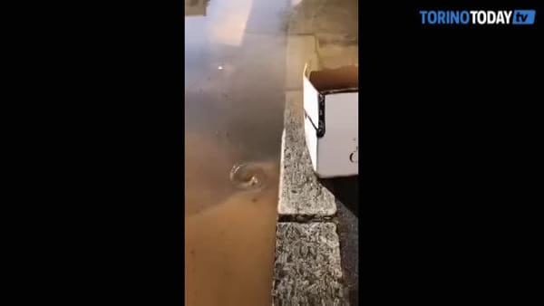 D'improvviso, la strada diventa un fiume e un pezzo di legno una passerella: video