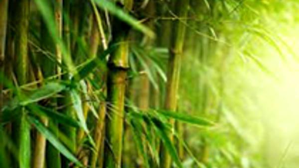 Seminario sui bamboo all'Orto Botanico