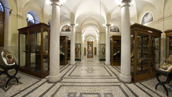 """MuseiAmo"", tappa al Museo di Anatomia Umana"