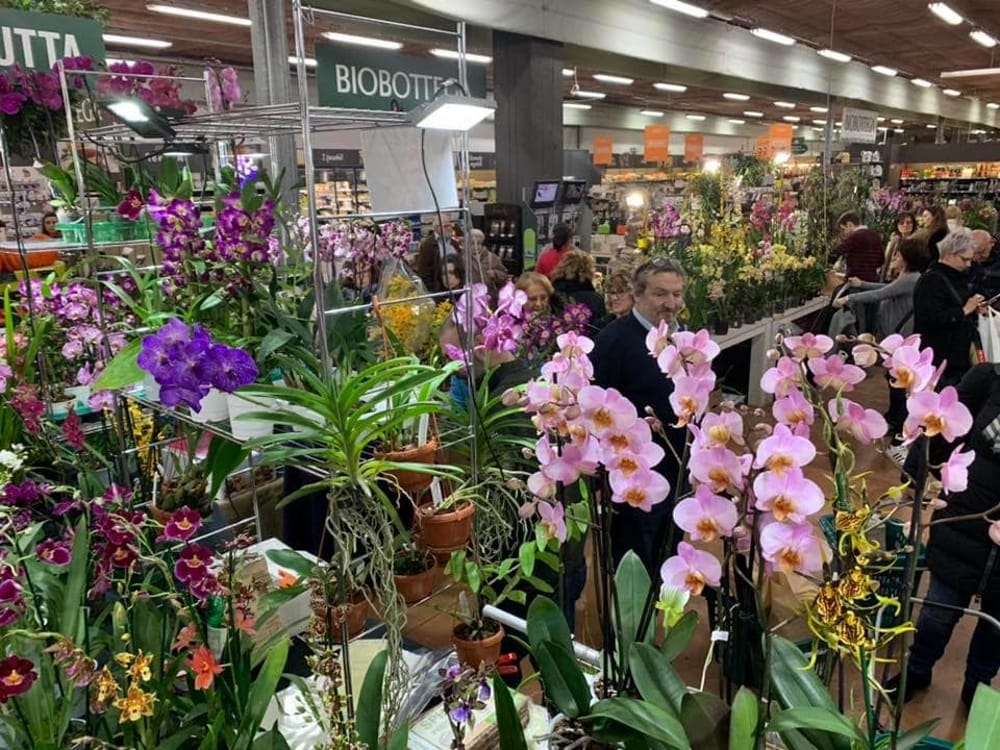 Orchiday, immagine di repertorio